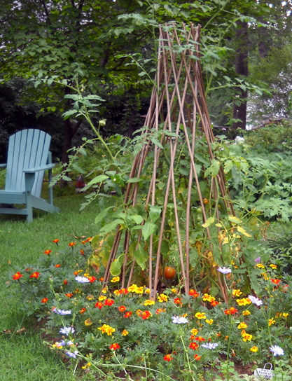 Polyculture: Tomatoes, Chili Peppers, and Marigolds (The Tower ...